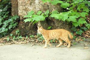 木登り猫4