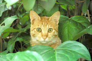 木登り猫5