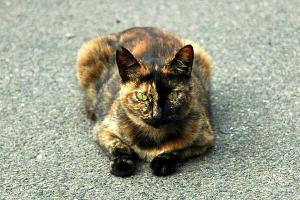 水たまり猫1