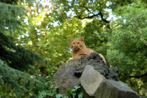 晩夏の涼み猫 日比谷公園
