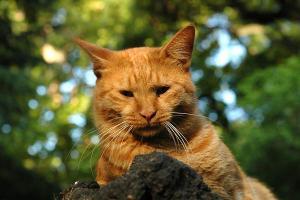 チャトラ猫 日比谷公園