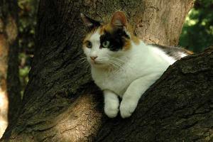 木登り猫 日比谷公園 calico cat named Sakura