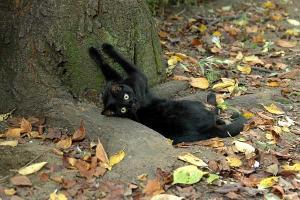 桜の落ち葉の中の猫