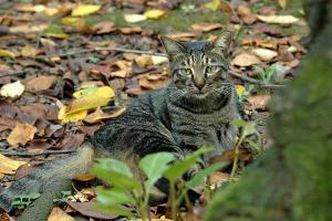桜の木の下の落ち葉と猫