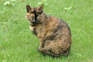 サビ猫(雑巾猫)@日比谷公園