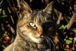 サビトラ猫