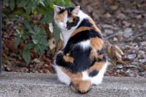 キメラ猫@日比谷公園