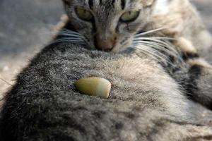 どんぐり猫