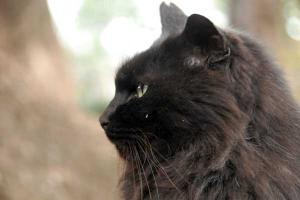 長毛黒猫 名前はジャンボ 日比谷公園