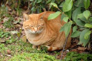 茶トラ猫@日比谷公園