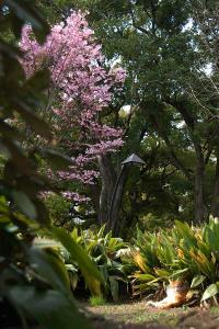 画面右下に猫がいます。日比谷公園の陽光桜猫