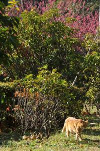 カンヒザクラ猫@日比谷公園