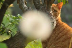タンポポの綿毛猫