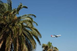 palm_trees_and_an_airplane.jpg
