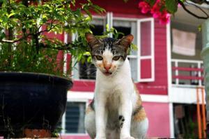 クチンの家を背景に野良猫