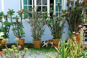 鉢植えと猫