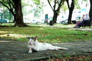 クチンのオールドモスク付近にいた猫