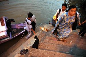 クチン川の船着き場と野良猫