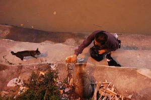 クチン川の船着き場の野良猫と餌遣りおじさん