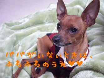 CIMG3807.jpg