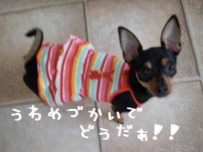CIMG3946.jpg