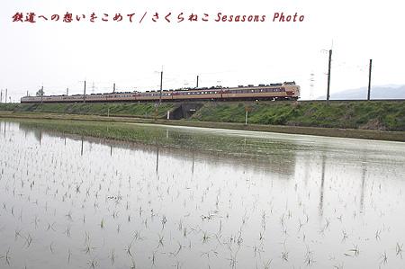 雷鳥水田1p