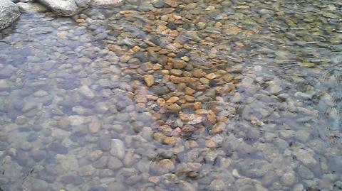 川のせせらぎconvert_20090505130145