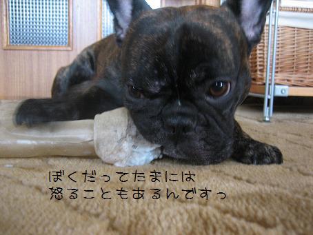 ビックな骨ガム 017