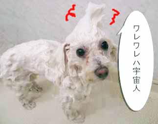 IMG_0465-s-b.jpg
