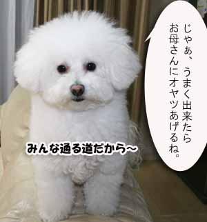 IMG_2417r.jpg