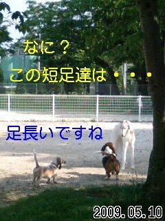 090510_8.jpg