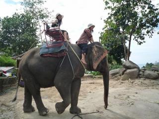 サムイ島 象乗り 観光ツアー タイ