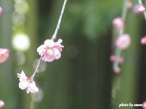 IMG_3873-s.jpg