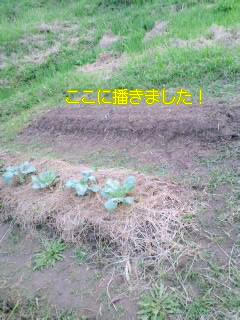 20090923182757.jpg