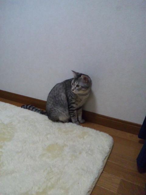 001_20120112110347.jpg
