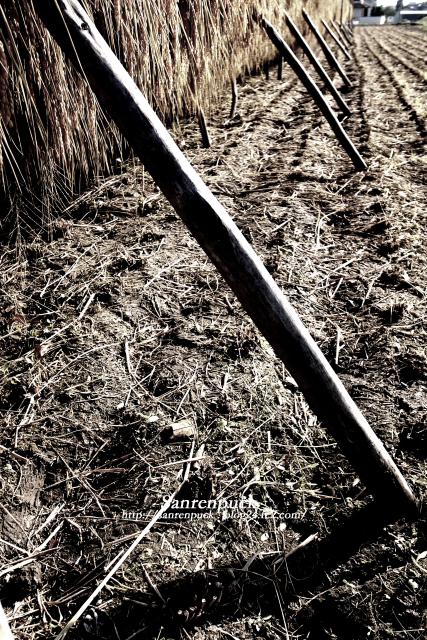収穫の構図