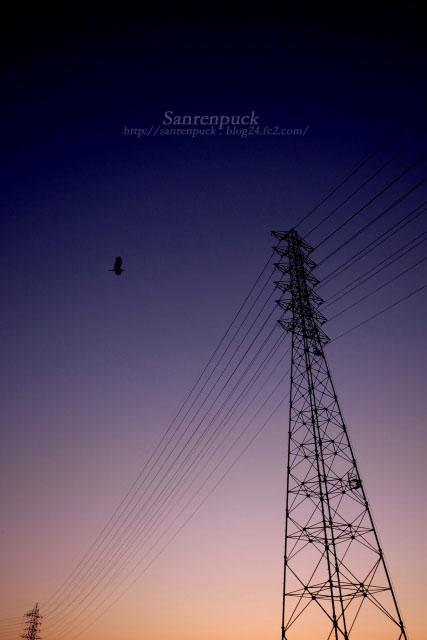夕闇に飛ぶ