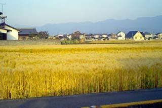 黄色いじゅうたん2