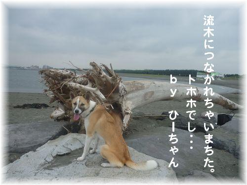流木と姫2