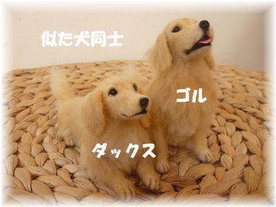 似た犬同士
