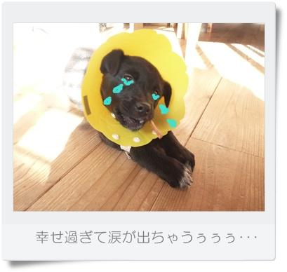■P1040078-①