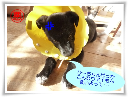 ■P1040059-①