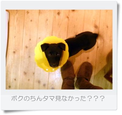 ■P1030998-①