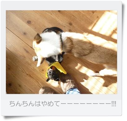 ■P1040088-①