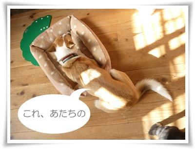 ■P1040081-①