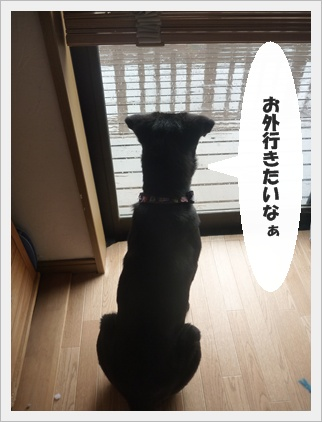◆P1050159-①