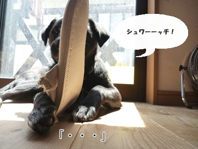 ★P1060104-③