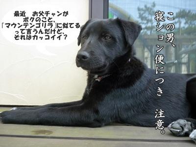 ☆P1060271-④