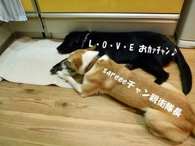 ◆P1060301-①