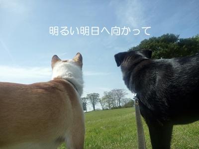 ★P1060407-⑯